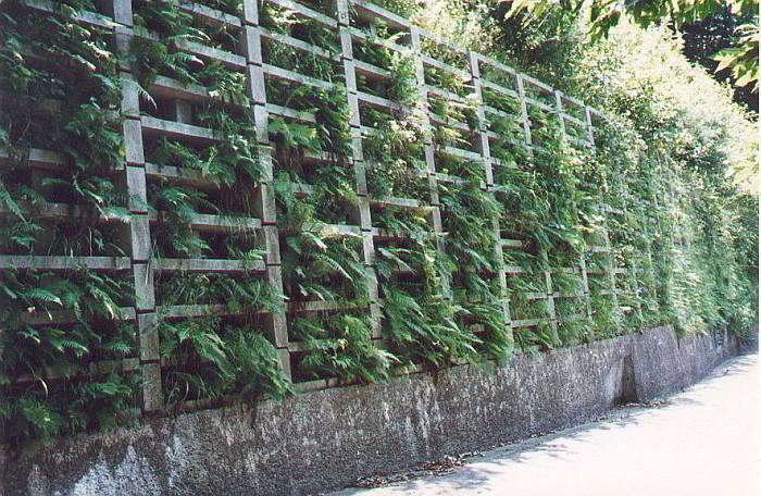 Muro di controripa in fase di riverdimento mediante piantumazione di essenze autoctone